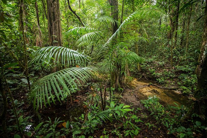 http://www.parc-amazonien-guyane.fr/sites/parc-amazonien-guyane.fr/files/pag_002564_bd.jpg
