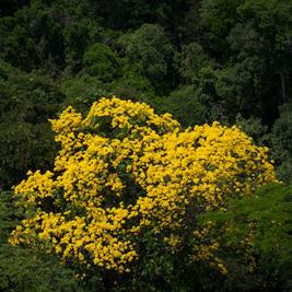La Grande forêt amazonienne