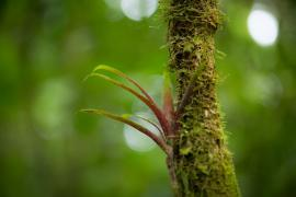 Epiphyte © Guillaume Feuillet / PAG