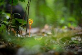 Fleur de sous-bois © Guillaume Feuillet / PAG